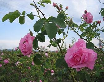 Sredna Gora a Údolí růží