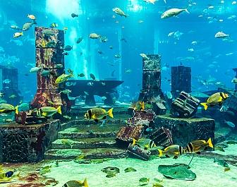 Morské zahrady