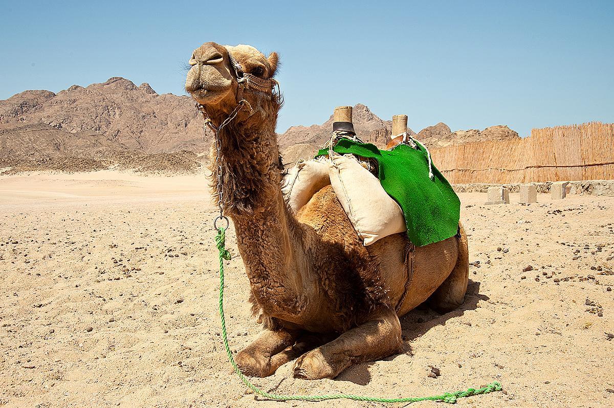 Egypt - Hurghada - Destinácia - CK Fischer