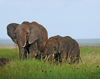 Národní parky Keňa, safari a sloni